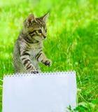 Piccolo gattino su erba Fotografia Stock Libera da Diritti
