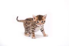 Piccolo gattino su priorità bassa bianca Fotografia Stock