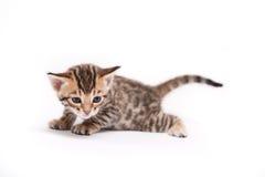 Piccolo gattino su priorità bassa bianca Immagine Stock
