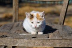 Piccolo gattino su una sedia Fotografia Stock Libera da Diritti