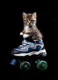 Piccolo gattino sui pattini di rullo. Fotografia Stock Libera da Diritti