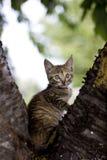 Piccolo gattino sveglio Immagine Stock