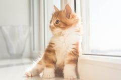 Piccolo gattino sveglio Fotografia Stock Libera da Diritti