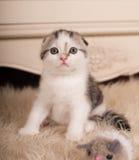 Piccolo gattino sveglio Immagine Stock Libera da Diritti