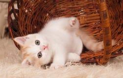 Piccolo gattino sveglio Immagini Stock Libere da Diritti