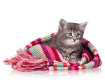 Piccolo gattino sveglio fotografie stock