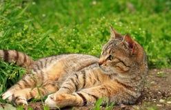 Piccolo gattino sveglio che gioca sulla fine dell'erba su immagini stock