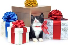 Piccolo gattino sveglio con il contenitore di regalo Fotografia Stock Libera da Diritti