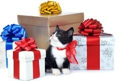 Piccolo gattino sveglio con il contenitore di regalo Fotografia Stock