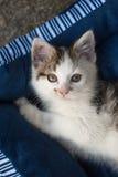 Piccolo gattino in una base del gatto fotografia stock