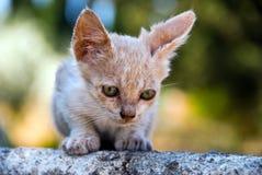 Piccolo gatto Immagini Stock Libere da Diritti