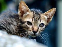 Piccolo gatto Immagini Stock