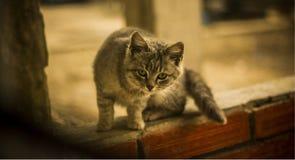 Piccolo gatto fotografie stock