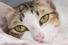 Piccolo gatto Fotografia Stock Libera da Diritti
