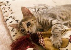 Piccolo gatto Immagine Stock Libera da Diritti