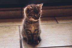Piccolo gatto Fotografie Stock Libere da Diritti
