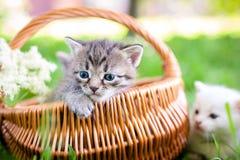 Piccolo gatto, all'aperto Immagini Stock