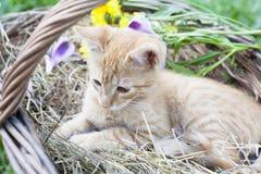 Piccolo gatto in cestino di vimini fotografie stock
