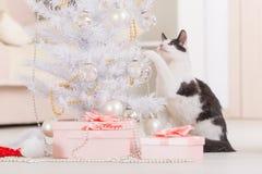 Piccolo gatto che gioca con gli ornamenti dell'albero di Natale Immagini Stock Libere da Diritti
