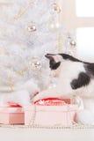 Piccolo gatto che gioca con gli ornamenti dell'albero di Natale Immagine Stock