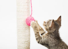 Piccolo gatto che gioca con una palla rosa Fotografia Stock