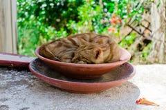 Piccolo gatto in ciotola Fotografie Stock