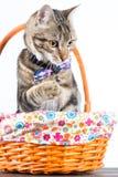 Piccolo gatto con il farfallino Fotografie Stock Libere da Diritti