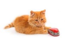 Piccolo gatto con il mouse fotografie stock