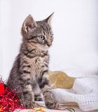 Piccolo gatto dei christmass Fotografie Stock Libere da Diritti