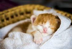 Piccolo gatto del bambino Immagine Stock