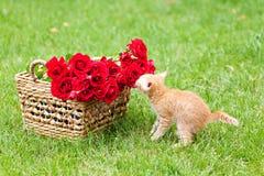 Piccolo gatto di curiosità immagini stock libere da diritti