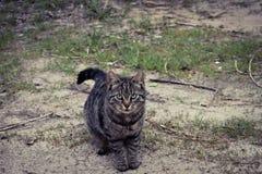 Piccolo gatto di tigre Fotografie Stock