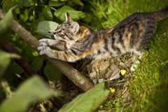 Piccolo gatto divertente Immagine Stock