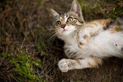 Piccolo gatto divertente Fotografie Stock