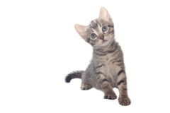 Piccolo gatto dolce Fotografia Stock