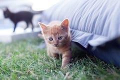 Piccolo gatto redheaded fotografia stock