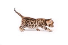 Piccolo gatto su priorità bassa bianca Immagini Stock