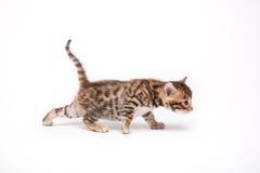 Piccolo gatto su priorità bassa bianca Fotografia Stock
