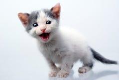Piccolo gatto su una priorità bassa chiara Fotografie Stock