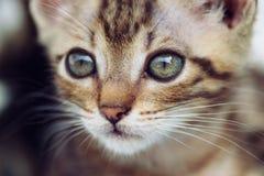 Piccolo gatto sveglio Fotografie Stock
