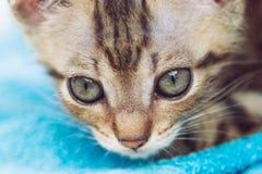 Piccolo gatto sveglio Fotografia Stock Libera da Diritti