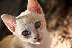 Piccolo gatto sveglio che guarda da solo Fotografia Stock Libera da Diritti