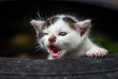 Piccolo gatto sveglio del bambino Fotografia Stock