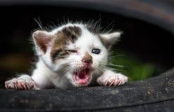 Piccolo gatto sveglio del bambino Fotografie Stock