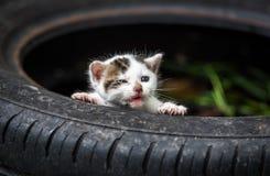 Piccolo gatto sveglio del bambino Immagini Stock Libere da Diritti