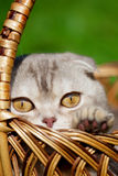 Piccolo gatto sveglio sulla natura Fotografie Stock Libere da Diritti
