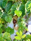 Piccolo giardino animale della lumaca all'aperto immagine stock