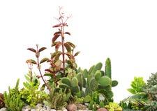 Piccolo giardino con i cactus Immagini Stock Libere da Diritti