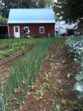 Piccolo giardino dell'azienda agricola Fotografia Stock Libera da Diritti