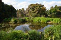 Piccolo, giardino, stagno, in mezzo dei giardini botanici, a Melbourne Immagini Stock Libere da Diritti